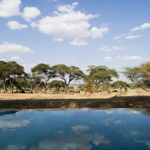 Sanctuary Swala, Tanzania Image