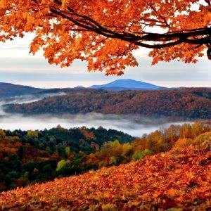 Herbst Image