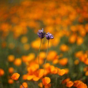 Frühling Image